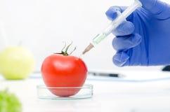 Forskaren arbetar på genetiskt ändrad mat Royaltyfri Bild