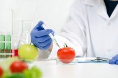 Forskaren arbetar på genetiskt ändrad mat Arkivbilder