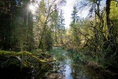 Forst bavarese selvaggio alla Baviera di Berchtesgaden fotografia stock