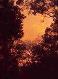Forst-brand i Queensland Waldbrand im Bundesstaat Queensland arkivbilder
