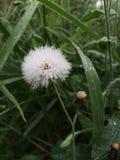 Forst da flor Fotos de Stock