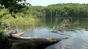 Forst del árbol de haya del verano en el lago Tornowsee en Brandeburgo Alemania destino turístico de Boltenmuehle inglés Molino d almacen de video