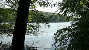Forst del árbol de haya del verano en el lago Tornowsee en Brandeburgo Alemania destino turístico de Boltenmuehle inglés Molino d metrajes