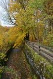 Forst för bokträdträd på den Maisinger kanjonen i Bayern royaltyfri foto