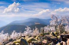 Forst frost i Carpathian berg royaltyfri foto