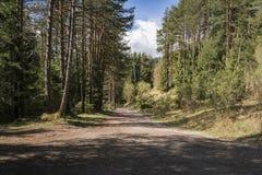 Forststraße, die durch eine Kiefernplantage führt Stockfotos