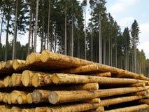Forstwirtschaft Lizenzfreies Stockbild