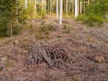 Forstwirtschaft stockfotografie