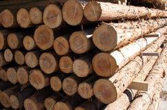 Forstwirtschaft Lizenzfreie Stockbilder