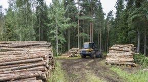 Forstwirtschaft in Finnland stockbilder