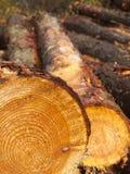 Forstwirtschaft gefällte Klotz, die auf Abbau warten lizenzfreie stockfotos