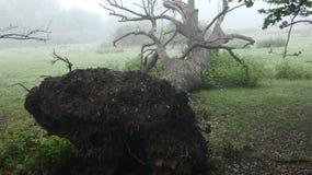 Forstwirtschaft an seinem natürlichsten, ein Frühlingsmorgen in Essex 5 stockbild