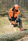 Forstwirtschaftsarbeitskraft mit Kettensäge sägt einen Klotz Prozess von loggin Stockfotos