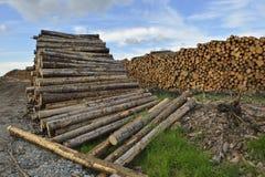 Forstwirtschaftsbauholzstapel Lizenzfreies Stockbild
