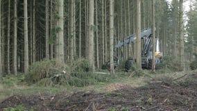Forstwirtschaftserntemaschinenfunktion stock video footage