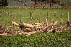 Forstwirtschaftshieb gewaschen auf Land durch Flutwasser und um einen Bauernhofzaun an Tolaga-Bucht, Neuseeland eingewickelt nach Lizenzfreie Stockfotos