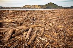 Forstwirtschaftshieb wusch sich oben auf Strand an Tolaga-Bucht, Neuseeland nach einer Flut Lizenzfreies Stockbild