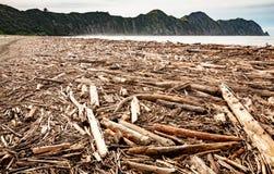 Forstwirtschaftshieb wusch sich oben auf Strand an Tolaga-Bucht, Neuseeland nach einer Flut Stockfotografie