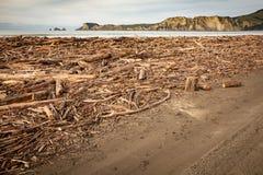 Forstwirtschaftshieb wusch sich oben auf Strand an Tolaga-Bucht, Neuseeland nach einer Flut Stockfotos