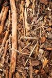 Forstwirtschaftshieb wusch sich oben auf Strand an Tolaga-Bucht, Neuseeland nach einer Flut Lizenzfreie Stockbilder