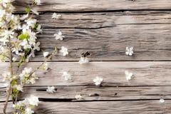 2 forsują pisklęca pojęcia Easter jajek kwiatów trawa malujących umieszczających potomstwa Zdjęcia Stock
