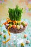 2 forsują pisklęca pojęcia Easter jajek kwiatów trawa malujących umieszczających potomstwa Obrazy Royalty Free