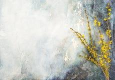 Forsycje kwitnie gałązki wiosny kwiatów ściennego tło Zdjęcie Stock