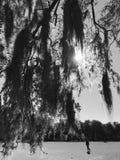Forsyth生苔树在大草原,乔治亚停放 库存图片