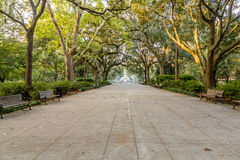 Forsyth Park in Early Morning Light. Walkway under southern oaks toward the fountain in Forsyth Park, Savannah, Georgia stock image