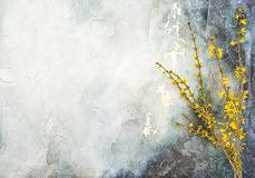 Forsythia blossoming twigs Spring flowers wall background Stock Photo