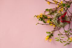 Forsythia branches with yellow flowers, a nest with cute red birds and colorful eggs on a pastel pink background.