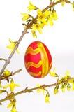 Forsythia con el huevo de Pascua Imagenes de archivo
