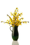 Forsythia flower Stock Image