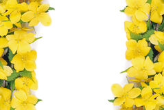 Free Forsythia Flowers Border Stock Image - 24505481
