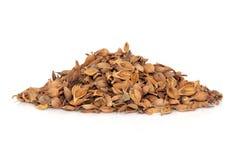 Forsythia Fruit Herb Stock Image