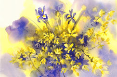 Forsythia and Iris flowers watercolor background Stock Photos