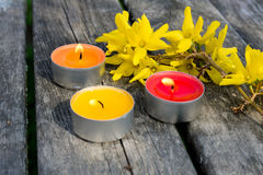 Forsythia. Yellow forsythia with some candles stock images