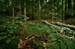 Forêt Images libres de droits