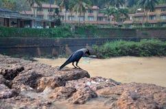 Fort Aguada, Goa, India Zdjęcia Royalty Free