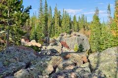 Forêt alpine dans la lumière du jour lumineuse Photographie stock libre de droits