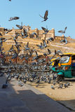 Fort ambre, Jaipur, Inde Images stock
