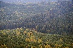 Forêt aérienne mistycal au-dessus du vert Images libres de droits