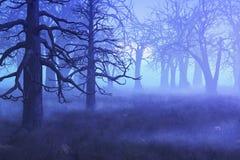 Forêt brumeuse de matin Photo stock