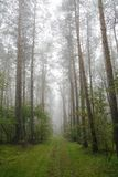 Forêt brumeuse en Pologne Photos libres de droits