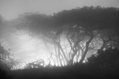 Forêt brumeuse noire et blanche Photographie stock libre de droits