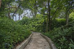 Fort Canning Park walking path between vegetation royalty free stock images