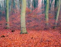 Forêt colorée d'automne Images stock
