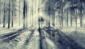 Forêt d'automne brouillée par paysage Photos stock