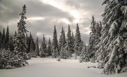 Forêt d'hiver Photos libres de droits