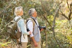Forêt d'observation d'oiseau de couples Photos libres de droits
